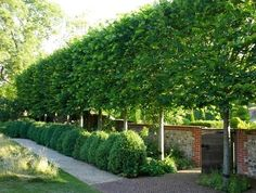 These stunning plants work hard to create outdoor privacy. These outdoor privacy plants are easy to manage, and a great addition to your yard. Try these plants for outdoor privacy! Privacy Trees, Privacy Plants, Privacy Landscaping, Outdoor Privacy, Backyard Privacy, Outdoor Landscaping, Landscaping Ideas, Hedges For Privacy, Landscaping Company