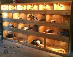 Custom reptile racks & enclosures. Www.facebook.com/highscalenclosures