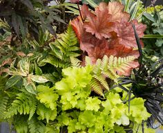 foliage not flowers...heuchera, fern, coral bells...
