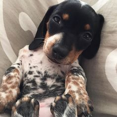 This is one of the most adorable puppies EVER! Enjoy RUSHWORLD boards, AWE FACTOR MORE CUTE THAN YOU CAN HANDLE, BARK RUFFINGTON'S DOG KINGDOM and UNPREDICTABLE WOMEN HAUTE COUTURE. Follow RUSHWORLD! We're on the hunt for everything you'll love!