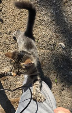 Guy Captures Moments of Him Being Chosen by Tabby Cat Found In the Street… - Katzenrassen Beautiful Cats Tumblr Photography, Animal Photography, Cute Baby Animals, Animals And Pets, Kittens Cutest, Cute Cats, Cat Run, Profile Pictures Instagram, Applis Photo