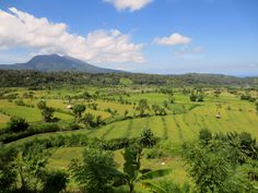 Spectacular ricefields in North of #Bali