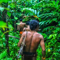 We the people- In the forests of Siberut Island, Indonesia, the Mentawai hunt monkeys with bows and poison arrows