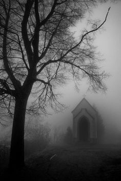 I love the dim light and foggy mist. It's so eerie and beautiful. Dark Photography, Black And White Photography, Beautiful Nature Photography, Silouette Photography, Haunted Places, Abandoned Places, Dark Places, Belle Photo, Dark Side