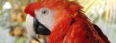 Ötödik Parrot, Bird, Animals, Parrot Bird, Animales, Animaux, Birds, Animal, Animais