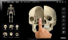 Skeleton System Pro III