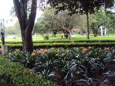 :) Plants, Bogota Colombia, Green, Plant, Planets