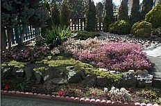 Xeriscape is a type of landscape that needs very little water. Here are the basic principles of starting your own xeriscape garden.