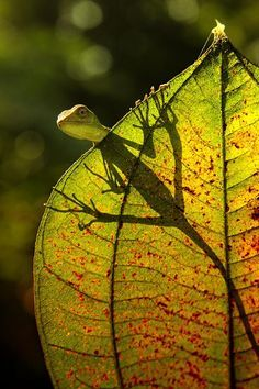 the shadow Reptiles All Gods Creatures, Cute Creatures, Beautiful Creatures, Animals Beautiful, Cute Animals, Funny Animals, Macro Photography, Wildlife Photography, Animal Photography