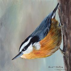"Daily+Paintworks+-+""Red+Breasted+Nuthatch""+-+Original+Fine+Art+for+Sale+-+©+Janet+Graham"
