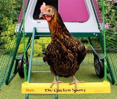 chicken on a swing - Google otsing