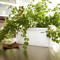 Growing Food in Small Spaces Made Simple: The Patch Planter is designed for urbanites, foodies, gardeners and families who want food at their fingertips