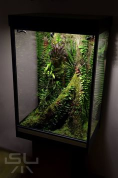 Nice wivarium with some Marcgravia