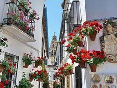 Flores en las paredes de las casas en el casco antiguo de Sitges, Cataluña, España