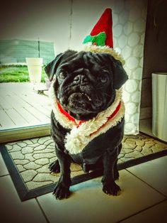 #Christmas #pug #carlin