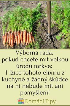Asparagus, Carrots, Gardening, Vegetables, Studs, Carrot, Lawn And Garden, Veggies, Vegetable Recipes