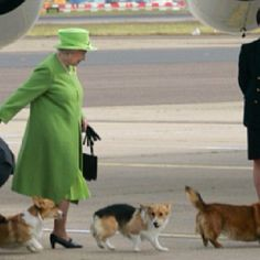 Queen Elizabeth and her Corgis.