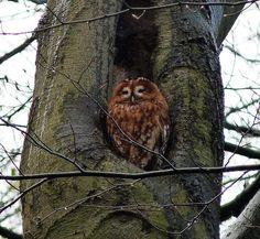 Gepind vanaf vroegevogels.vara.nl - Bosuil