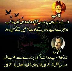 Gaalib Or Iqbal humarey do azeem POETS