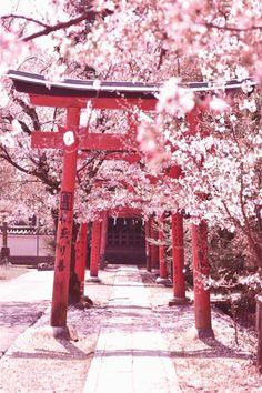 Sensō-ji, Tokyo - Japan - 15 Truly Astounding Places To Visit In Japan. Cherry Blossom Japan, Cherry Blossom Season, Japanese Cherry Blossoms, Aesthetic Japan, Japanese Aesthetic, Japanese Landscape, Japanese Art, Japanese Quotes, Pastel Landscape