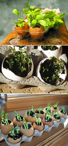 Save your large egg shells next time you bake, wash them out (or not!) and plant them with seeds. Once the plants are large enough, just transfer the whole egg into the ground. The shell is actually a great fertilizer and the roots will be able to break right through. Especially good for tomato plants.  The calcium in the egg shells help splitting.