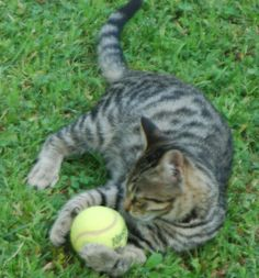 PILUS GIARDINIERE -  free cats coming to my garden for food&drink&playing