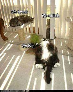 cats - on break, on watch, on catnip...