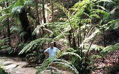 Resultado de imagen de angiopteris evecta king fern