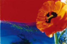 acid bloom, 2003