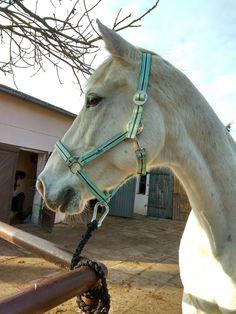 Majka the horse