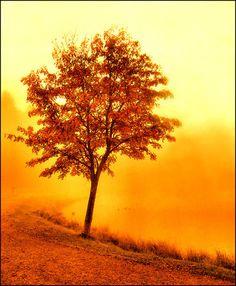 http://fc04.deviantart.net/fs32/i/2008/211/6/0/Do_you_like_the_color_orange___by_karil.jpg