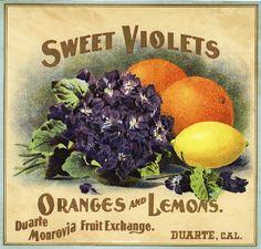 Duarte Sweet Violets Orange Citrus Crate Label Print | eBay