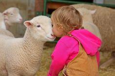 Farm Insurance, Goats, Animals, Animales, Animaux, Animal Memes, Animal, Goat, Animais
