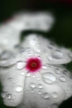 "Japanese Haiku poem by TANEDA Santoka 種田山頭火 (1882-1940) 雨だれの 音も 年とった ""The sound of the rain-drops also / Has grown older."""