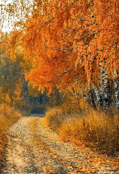 Country road in autumn (Russia) by Anton Starikov [photographer identified by watermark, but I can't find a link with this photo]