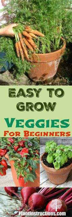 Easy to Grow Veggies for Beginners | Plant Instructions