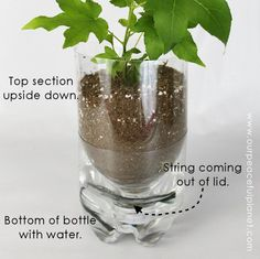 Unique Planters From Soda Bottles unique planters from soda bottles, container gardening, gardening, how to, repurposing upcycling Soda Bottle Crafts, Plastic Bottle Crafts, Soda Bottles, Plastic Bottles, Water Bottles, Diy Self Watering Planter, Self Watering Plants, Self Watering Containers, Diy Hanging Planter