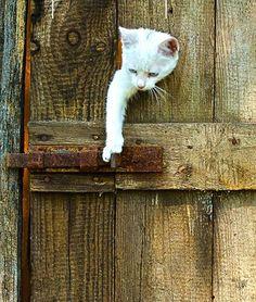 Ya casi!!!ya casi!!!Abro la puerta