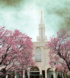 bountiful temple lds tree blossoms may 2011   Flickr - Photo Sharing!