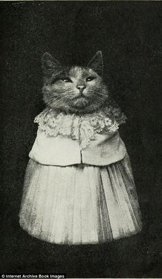 Husband and wife? Many of the cats are dressed up in intricate costumes, their size suggesting they may have been painstakingly custom-designed