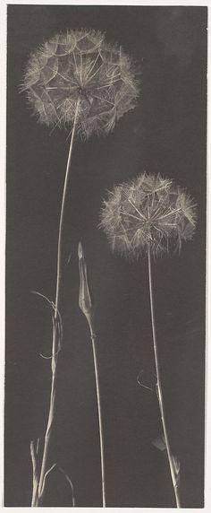 Frederick H. Evans photograph, 1900s-1920s, Metropolitan Museum of Art collection
