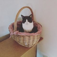 Sylvia likes the egg basket... #eggs #cats #catsofinstagram #catstagram