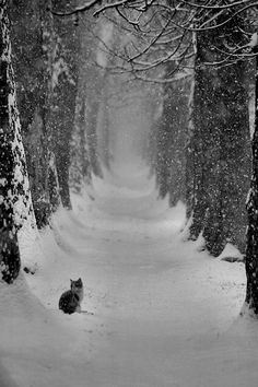 a cat stopped by the woods on a snowy evening...