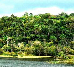 Flora da Amazônia Brasileira