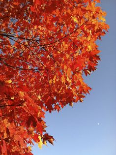 Fall colors, #Reston, #Virginia