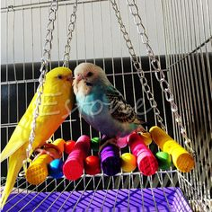 Pet Bird Parrot Parakeet Budgie Cage Hammock Swing Toys Hanging Toy Dreamed in Pet Supplies, Bird Supplies, Toys Parakeet Cage, Cockatiel Cage, Budgie Parakeet, Budgies, Parrot Pet, Parrot Toys, Parrot Bird, Budgie Toys, Pet Bird Cage