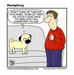 Humphrey the Pug