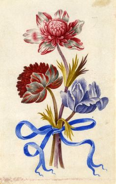 Drawing from an album, red and white, and purple Anemones, tied with blue ribbon Watercolour over metalpoint, shaded with grey wash, on vellum