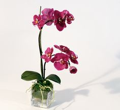 orchids are my favorite =)