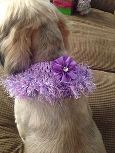 Lavender collar with hand crochet lavender & pink ruffle accented with a lavender flower.